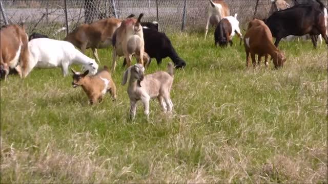 Watch and share Knsfarm GIFs and Aww GIFs by KNS Farm on Gfycat