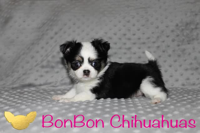 Watch and share Chihuahua Puppy Wink Gif GIFs on Gfycat