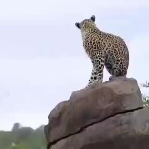 Watch and share Nature GIFs by tothetenthpower on Gfycat