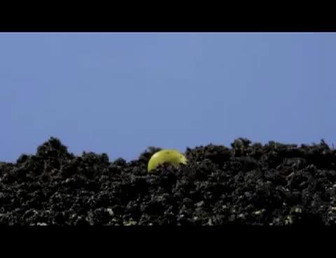 Watch and share Video Crecimiento De Una Planta GIFs on Gfycat