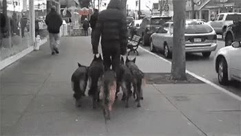 Watch If you have a pooch who needs to be walked, your morning GIF on Gfycat. Discover more related GIFs on Gfycat