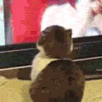 Watch and share Oh Hai Misc Angie Varona/ww Photo: Terror Cat Will Wipe You From Existence Catjpgec3.gif GIFs on Gfycat