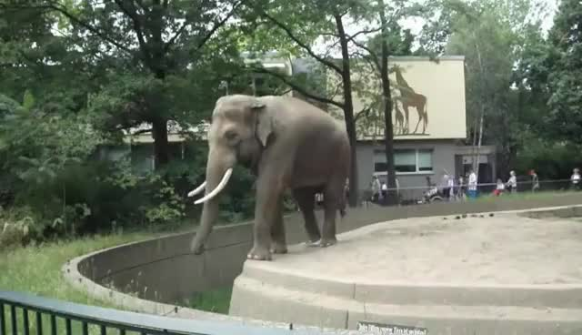 Watch elephant GIF on Gfycat. Discover more poo GIFs on Gfycat