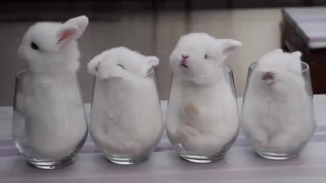 Watch and share Rabbit GIFs and Cute GIFs by annhltr on Gfycat