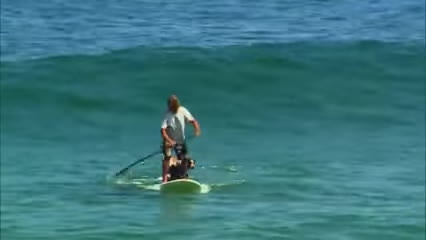 sup, surf, surfing, Incredible SUP Dog Surfing GIFs
