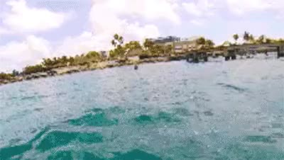 Watch and share Swimming With The Dolphins In Cancun, Mexico. #travel #cancun #mexico GIFs on Gfycat