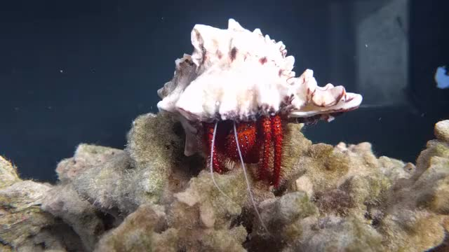 Watch and share Aquariums GIFs and Awwnverts GIFs on Gfycat