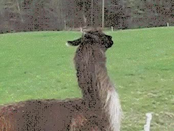 Watch and share Farm Animals GIFs on Gfycat