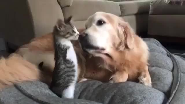 Watch and share Friend GIFs and Kitten GIFs by tatdaddy504 on Gfycat
