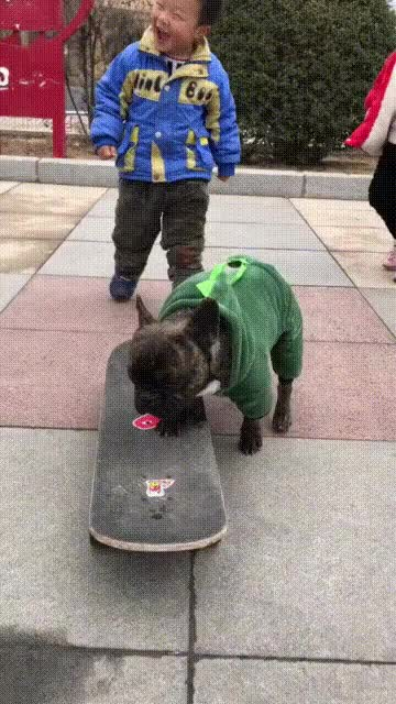 Watch and share Dog Skateboarding GIFs and Smart GIFs by soees on Gfycat