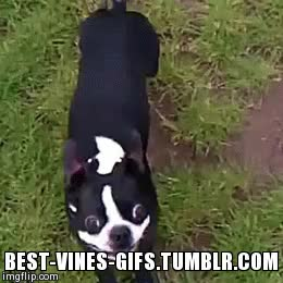 Watch and share Best Vines GIFs on Gfycat