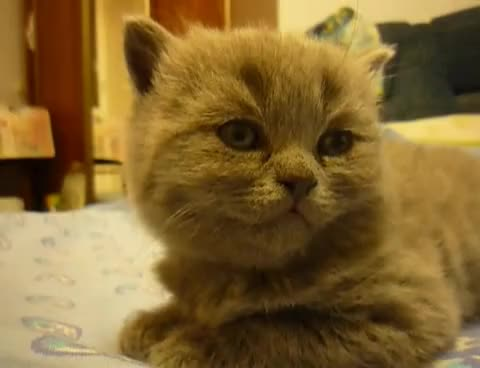 Watch kitten fall asleep GIF on Gfycat. Discover more kitten GIFs on Gfycat