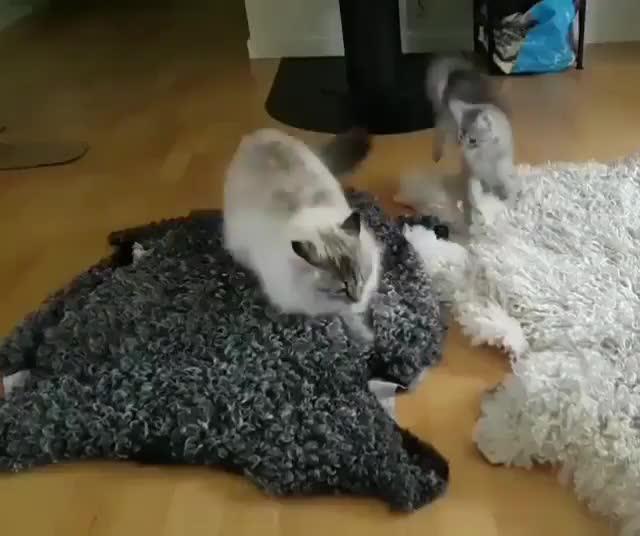 cats, You dare awaken the ninja?! GIFs