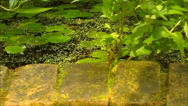 Watch and share Amphibians GIFs and Animals GIFs on Gfycat