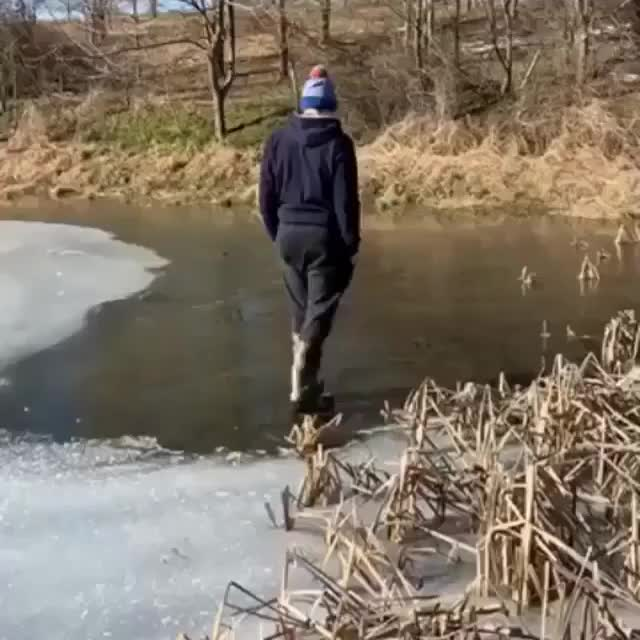 funny, ice, If I walk onto the clearer ice GIFs