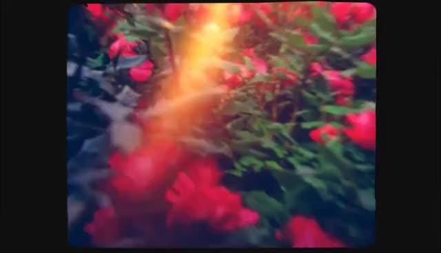 Watch Lana GIF on Gfycat. Discover more lana del rey GIFs on Gfycat