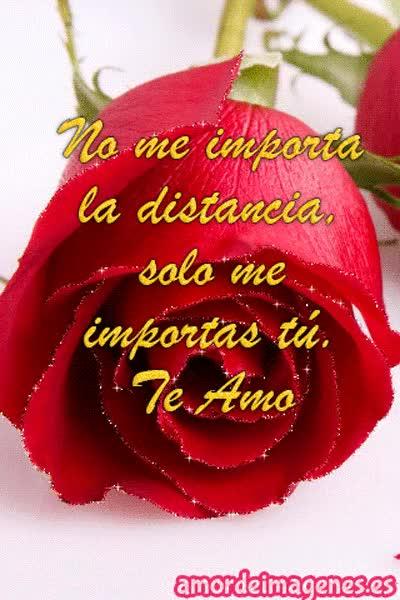 Watch and share Imagenes De Rosas Con Movimiento Rosa Roja GIFs on Gfycat