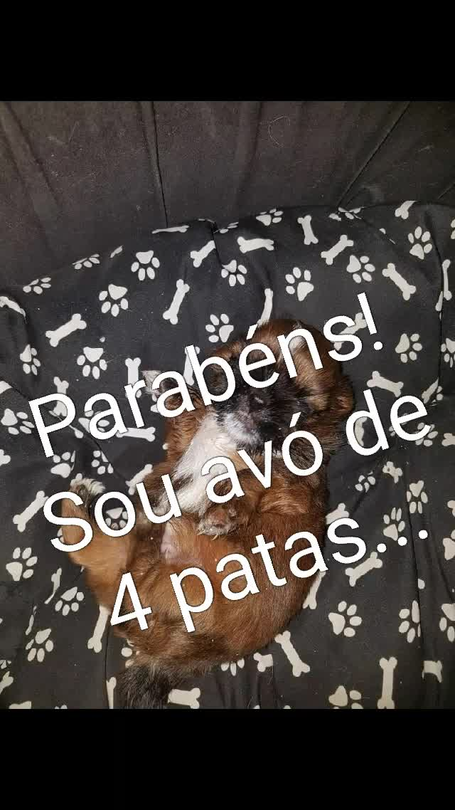 Watch and share Parabéns! Sou Avó De 4 Patas... GIFs by ghost_f36z5nw1mi5stb on Gfycat