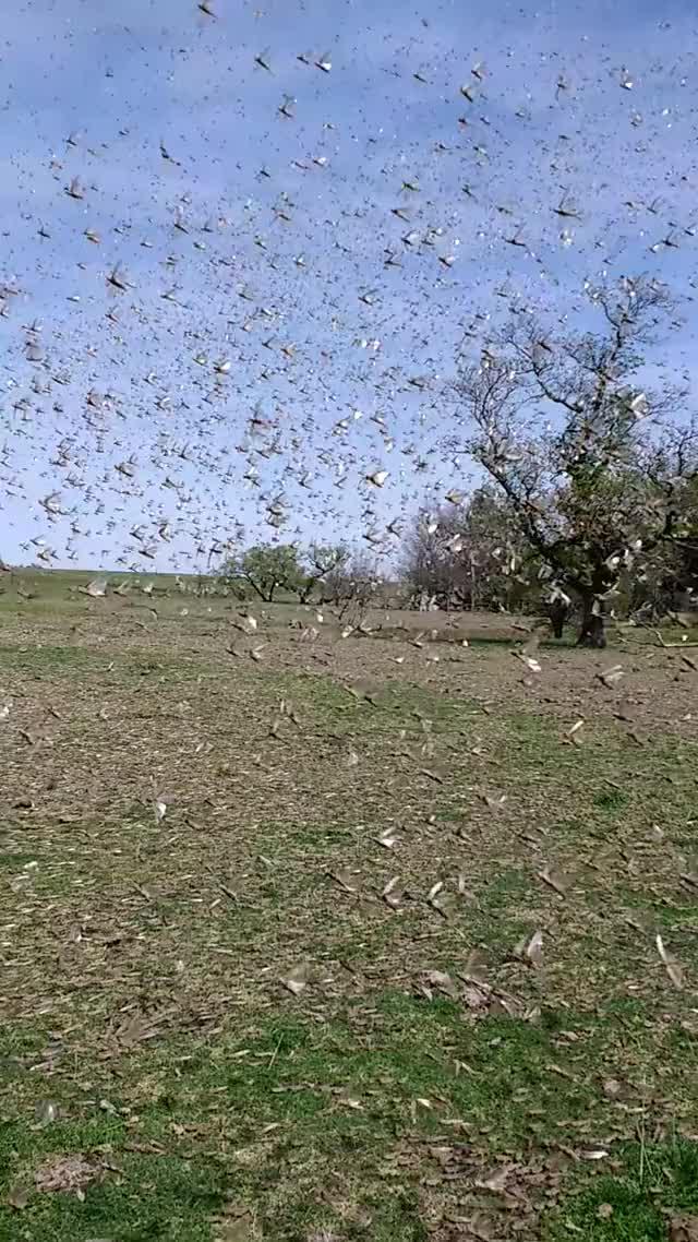 Watch and share Grasshopper GIFs and Viralhog GIFs by Slim Jones on Gfycat