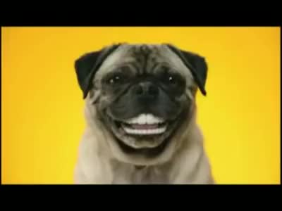 Watch and share Reklama PEDIGREE DENTASTIX GIFs on Gfycat