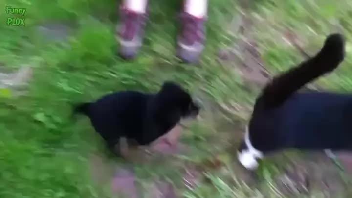 Eyebleach, pawnd, Close enough, dog ! (reddit) GIFs