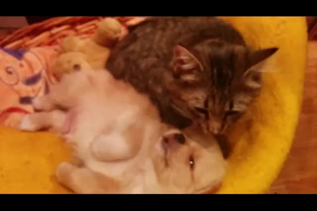 Watch this GIF by Gothicmaster (@gothicmaster) on Gfycat. Discover more animalsbeingbros GIFs on Gfycat