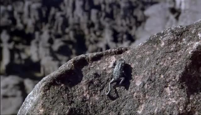 Pebble Toad GIFs