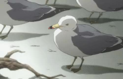 Watch and share Seagull GIFs on Gfycat