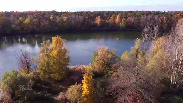Watch and share Autumn GIFs and Nature GIFs by notmyproblem on Gfycat