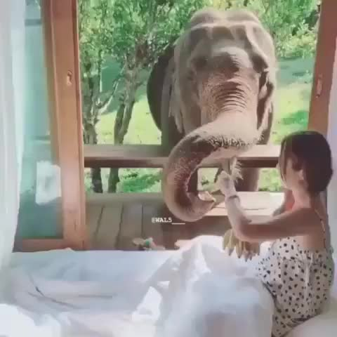 Watch why can't this be me? GIF by PM_ME_STEAM_K3YS (@pmmesteamk3ys) on Gfycat. Discover more adorable, amazing, elephant, elephantlove, elephantlover, elephants, happiness, happy, love, wildlife GIFs on Gfycat
