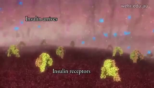 Watch and share Insulin Production And Type 1 Diabetes GIFs on Gfycat