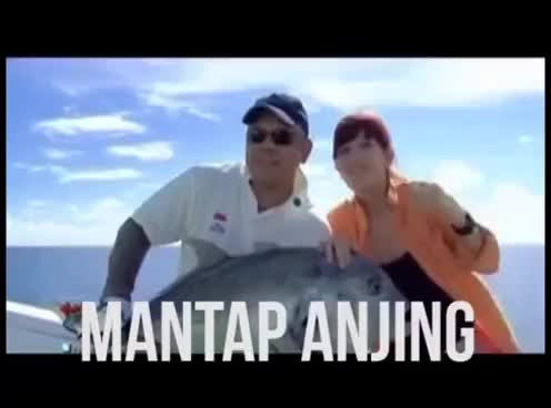Watch and share Mantap Anjing Compilation GIFs on Gfycat