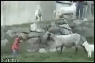 Watch animalsbeingjerks GIF on Gfycat. Discover more related GIFs on Gfycat