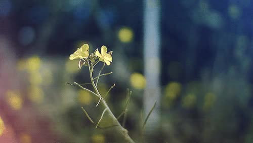 Watch and share Flower Wind Breeze Gentle GIFs on Gfycat