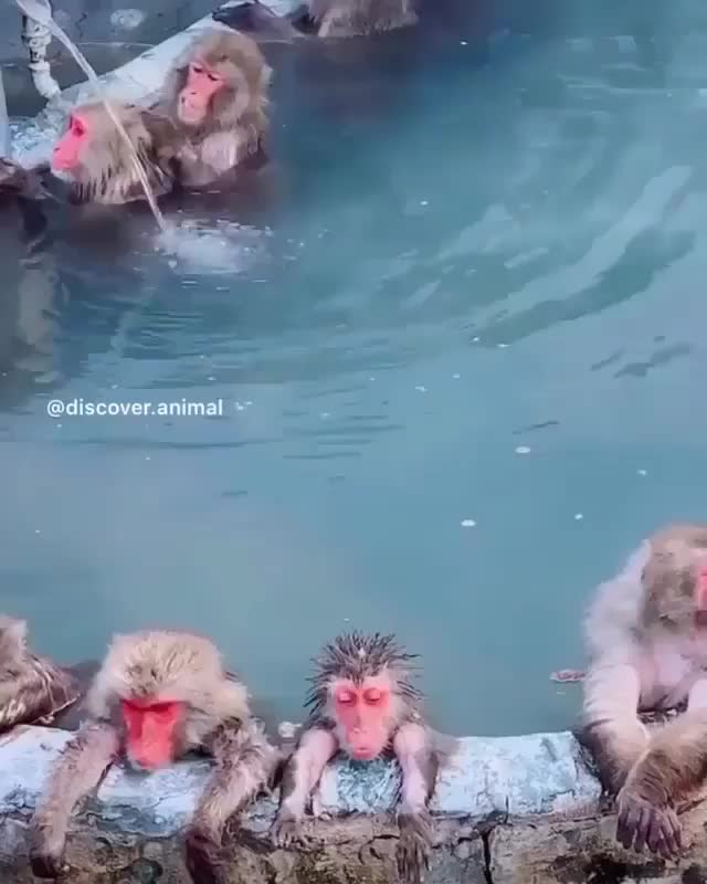 Watch and share Monkeys GIFs by Unsurprised on Gfycat