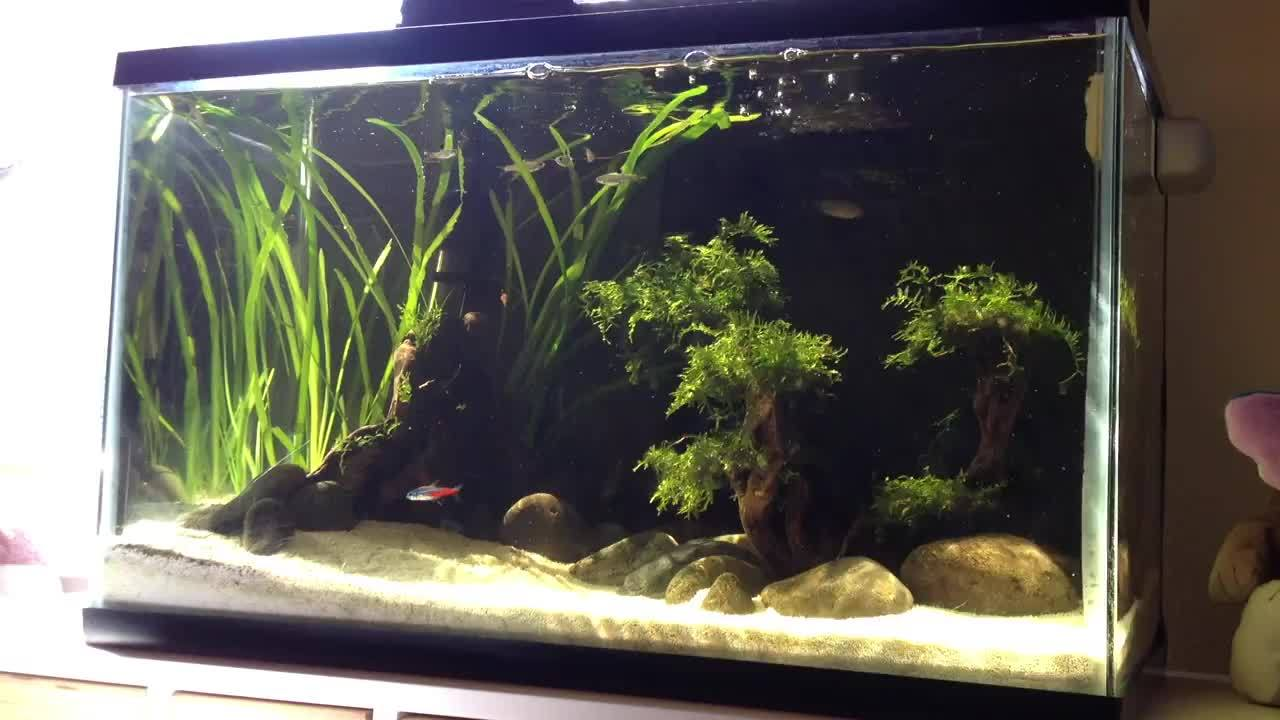 PlantedTank, plantedtank, While doing maintenance on my 10G, I noticed how perfectly the afternoon sunbeams illuminated it. [gif] (reddit) GIFs