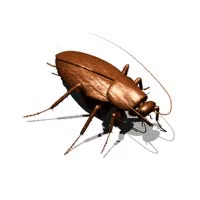 Watch and share Roach GIFs on Gfycat