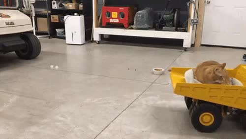 Watch and share Cat-vs-rc-truck GIFs by notlydia on Gfycat
