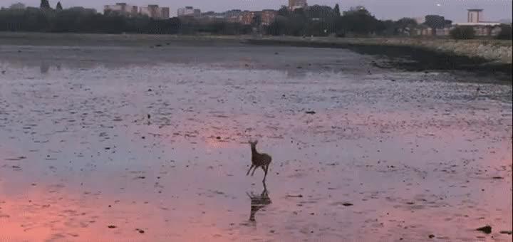 AnimalGIFs, animalgifs, gifs, Majestic AF Deer (reddit) GIFs