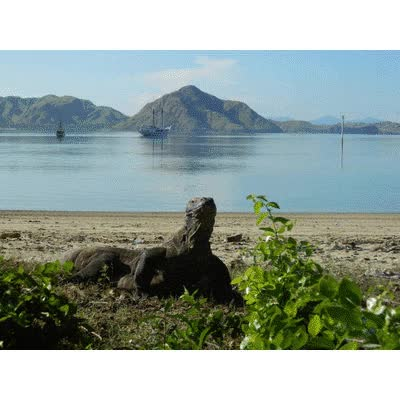 Watch and share Tours To Komodo GIFs by dreamkomodotour on Gfycat