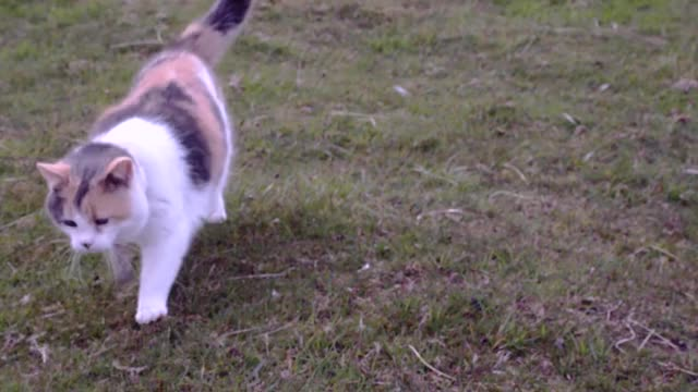Watch Stevie GIF by @littleriver on Gfycat. Discover more Stevie, aww, blind, cat, cats, cute, ireland, kat, kitty, uplifting GIFs on Gfycat