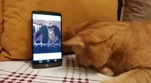 Watch Blind cat gives his favourite pianist a hug every time he hears him play. (reddit) GIF on Gfycat. Discover more related GIFs on Gfycat