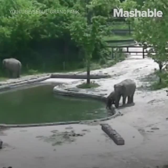 Watch this GIF by Koleandra (@koleandra) on Gfycat. Discover more elephant GIFs on Gfycat