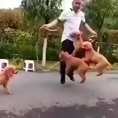 Watch and share Jump Rope GIFs and Puppies GIFs by elee0228 on Gfycat