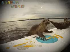 Watch and share Seal Pup Surfers GIFs and Remote Camera GIFs on Gfycat