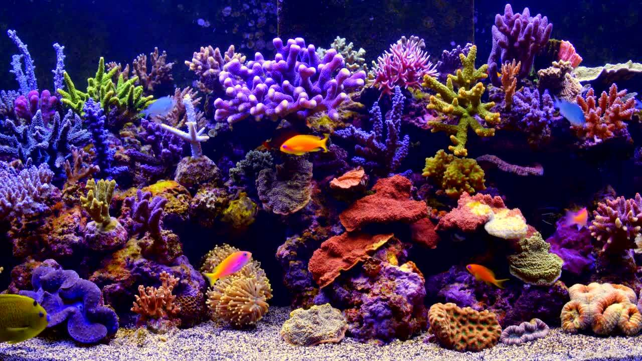 The Best 4k Aquarium Video Gif Find Make Share Gfycat Gifs