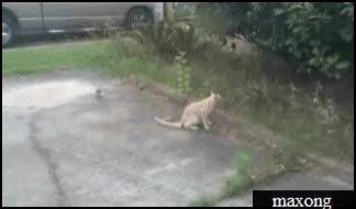 Watch and share Гифки-собака-живность-птичка-2851234 GIFs by humanother on Gfycat