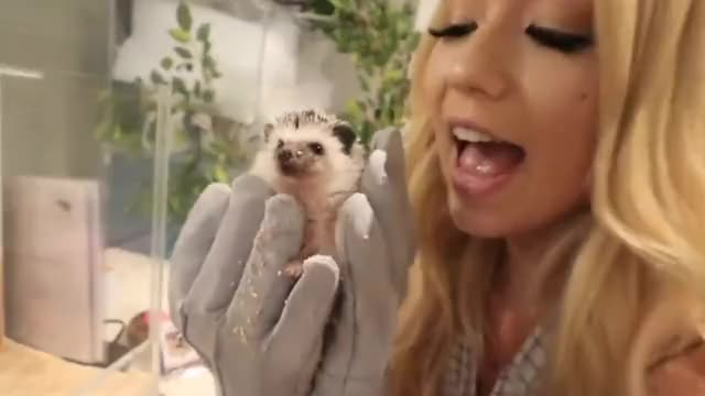 Watch this hedgehog GIF on Gfycat. Discover more 2018, Japan, Mia, hedgehog, japan, mamamiamakeup, mia, stammer, tokyo, vlog, vlogs GIFs on Gfycat