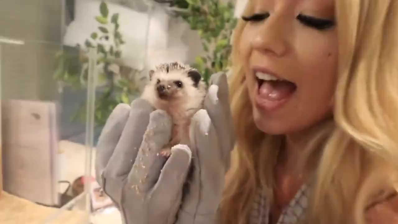 2018, Japan, Mia, hedgehog, japan, mamamiamakeup, mia, stammer, tokyo, vlog, vlogs, Tokyo Hedgehog Cafe! GIFs