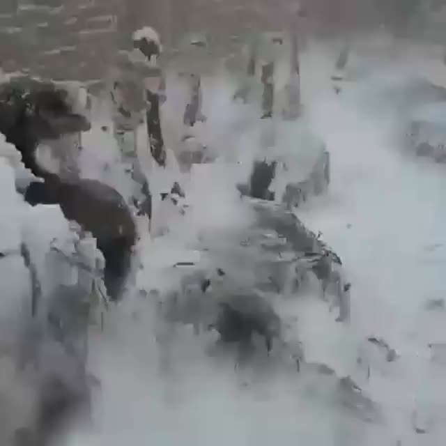 Ice attacks ducks and ostriches in north of iran, nature, Ice attacks ducks and ostriches in north of iran GIFs